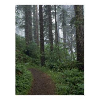 Redwood forest in fog, Oregon Postcard