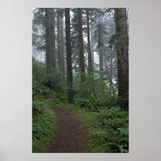Redwood forest in fog, Oregon Poster