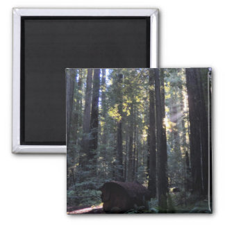 Redwood Forest 2 Inch Square Magnet