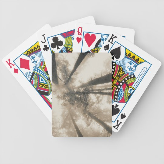 Redwood Forest, Northern California Bicycle Playing Cards