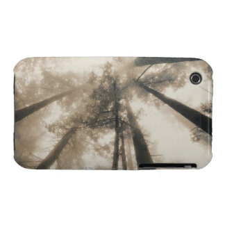 Redwood Forest, Northern California Case-Mate iPhone 3 Case