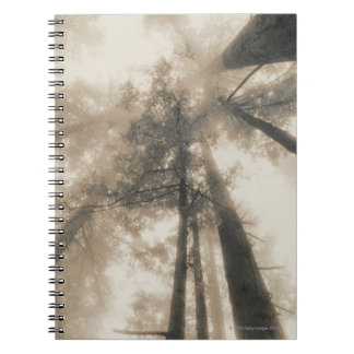 Redwood Forest, Northern California Notebook