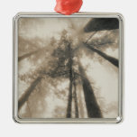 Redwood Forest, Northern California Square Metal Christmas Ornament