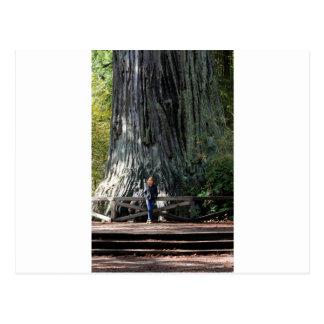 Redwood Forest Postcard