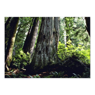 Redwood Forest, Prairie Creek Custom Invite