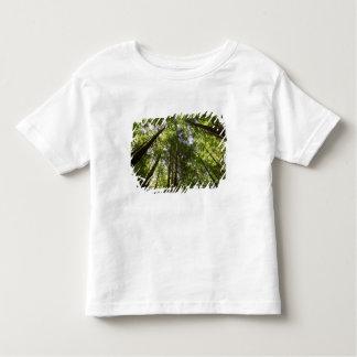 Redwood Forest, Rotorua, New Zealand 2 Toddler T-shirt