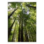 Redwood Forest, Rotorua, New Zealand Card