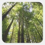 Redwood Forest, Rotorua, New Zealand Square Stickers