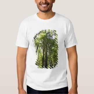 Redwood Forest, Rotorua, New Zealand T-Shirt
