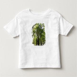 Redwood Forest, Rotorua, New Zealand Toddler T-shirt