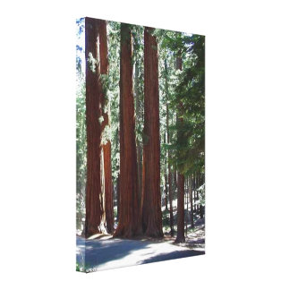 Redwood Forest Sequoia Tree Wall Art Canvas Prints