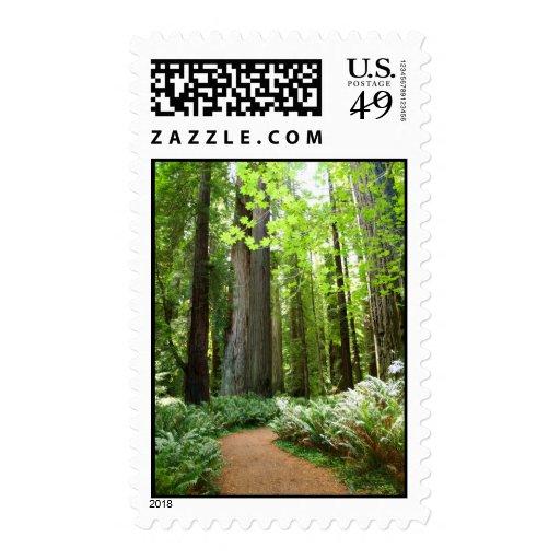 Redwood Forest Stamp