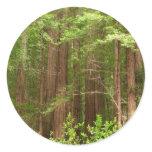 Redwood Forest Sticker