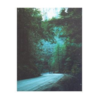 Redwood Grove Lane California Gallery Wrap Canvas
