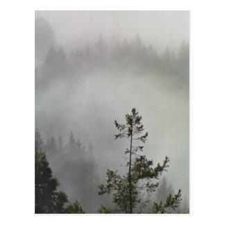 Redwood Haze Postcard