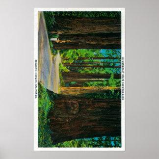 Redwood Highway in Humboldt State Redwood Park Poster