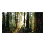 Redwood Morning Card
