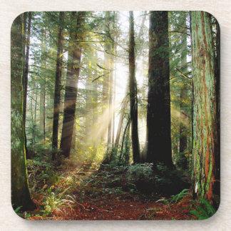 Redwood Morning Coasters