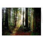 Redwood Morning Greeting Card
