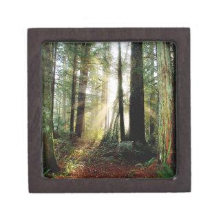 Redwood Morning Keepsake Box