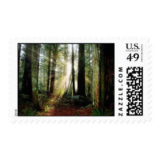 Redwood Morning Postage Stamp