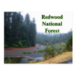 Redwood National Forest Postcard