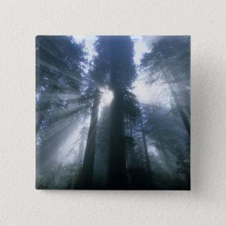 Redwood National Park, Del Norte County, foggy Button