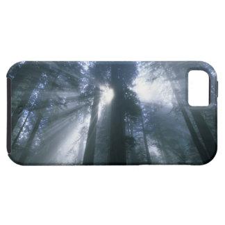 Redwood National Park, Del Norte County, foggy iPhone SE/5/5s Case