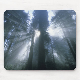 Redwood National Park, Del Norte County, foggy Mouse Pad