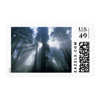 Redwood National Park, Del Norte County, foggy Postage