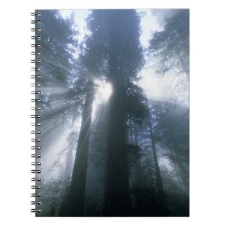 Redwood National Park, Del Norte County, foggy Spiral Notebook