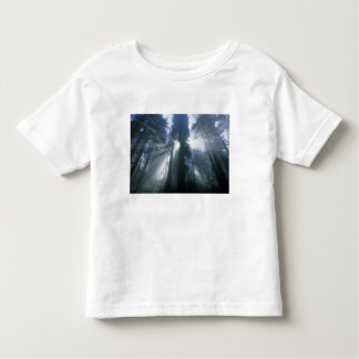 Redwood National Park, Del Norte County, foggy Toddler T-shirt