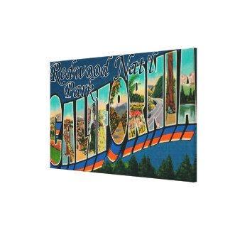 Redwood Nat'l Park, California Canvas Prints