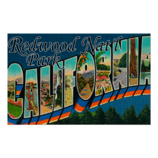 Redwood Nat'l Park, California Poster