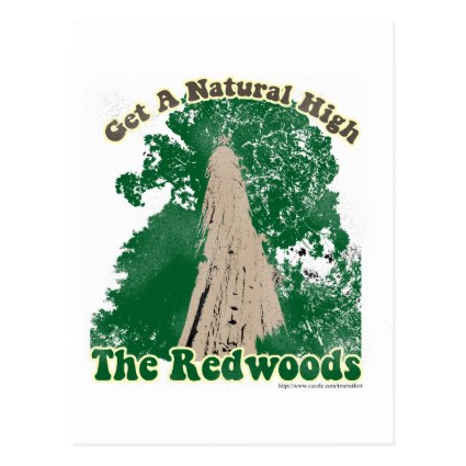 Redwood Natural High Post Card