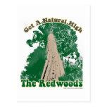 Redwood Natural High Postcard
