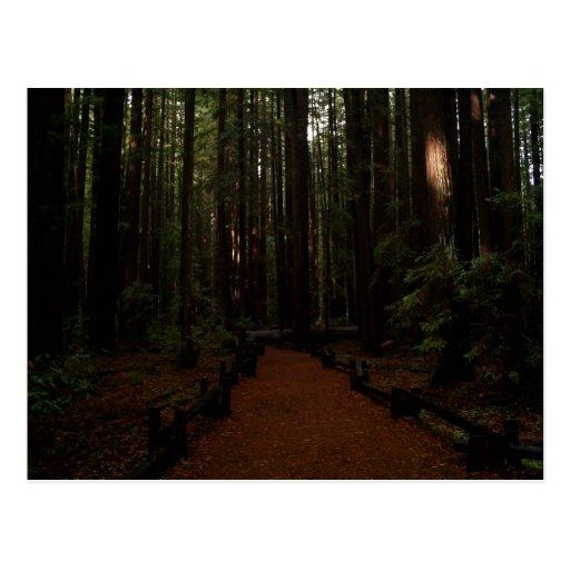 Redwood Paradise Postcard