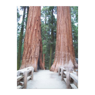 Redwood Path Gallery Wrap Canvas