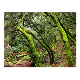 Redwood Regional Park California Postcard