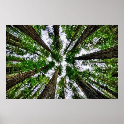 Redwood Skies Poster