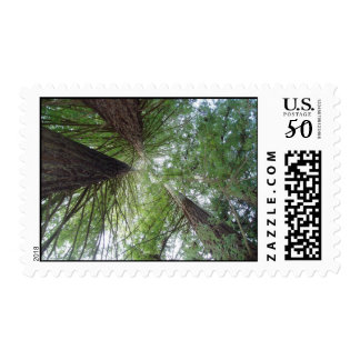 Redwood Stamp