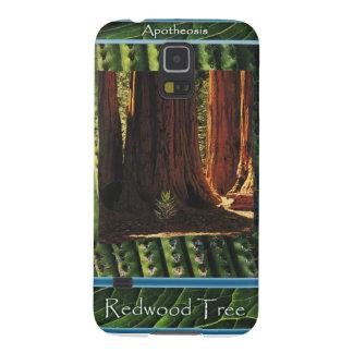 Redwood Tree - Apotheosis Galaxy S5 Case