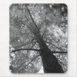 Redwood Tree Black and White Mouse Pad