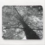 Redwood Tree Black and White Mousepad
