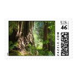 Redwood Tree Forest postage stamps California
