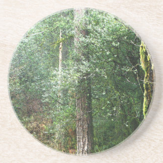 Redwood Tree Woods Coaster