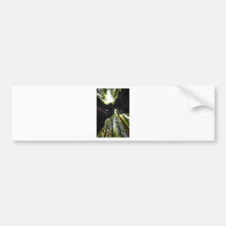 Redwood Trees and Trunk Bumper Sticker