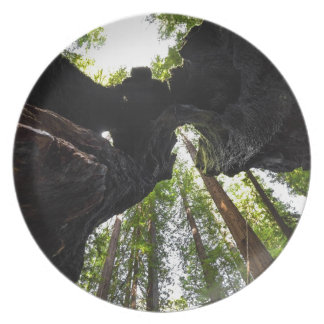 Redwood Trees and Trunk Party Plate