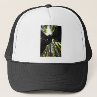Redwood Trees and Trunk Trucker Hat