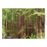 Redwood Trees at Muir Woods National Monument Stationery Note Card